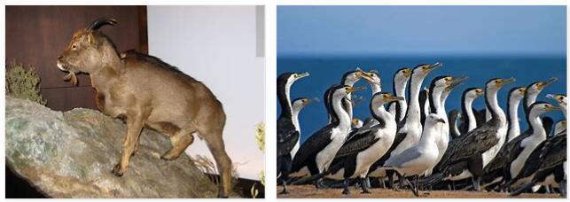 Balearic Islands Animals