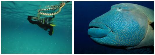 Palau Animals
